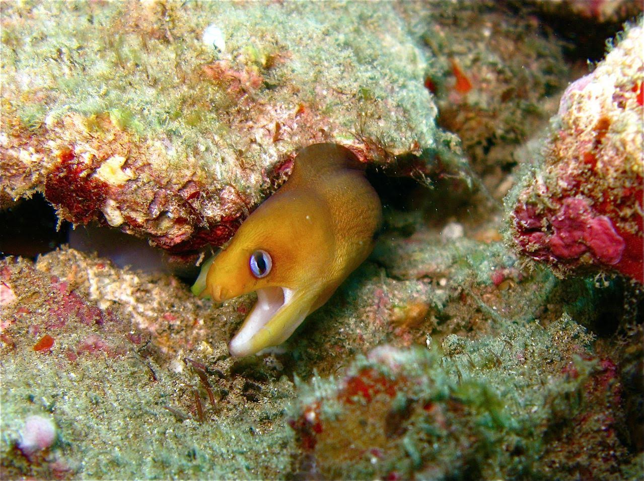 5 Caves – Dwarf Moray