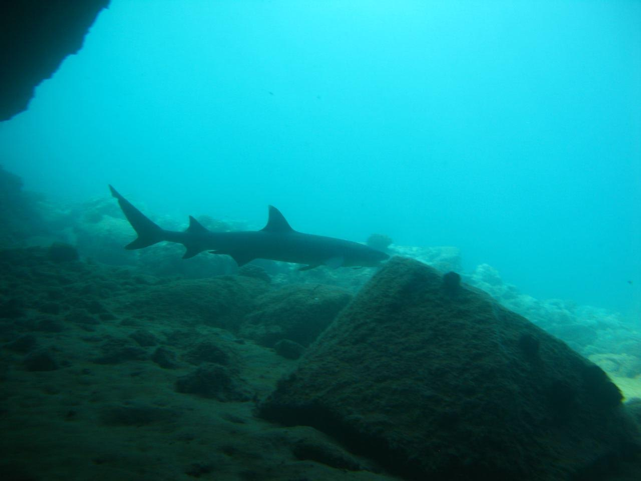 5 Caves – Reef Shark