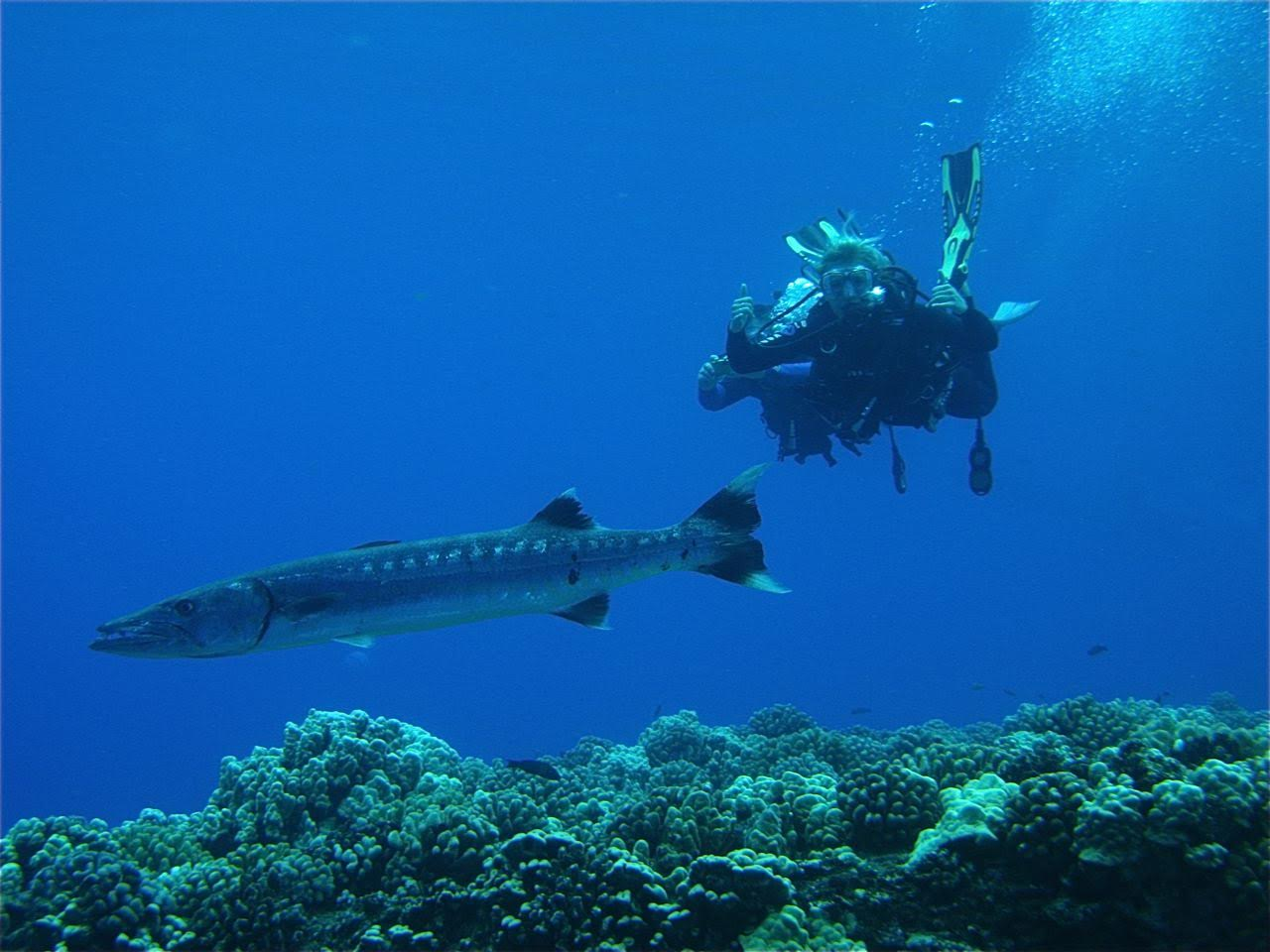 Center Reef- Barracuda