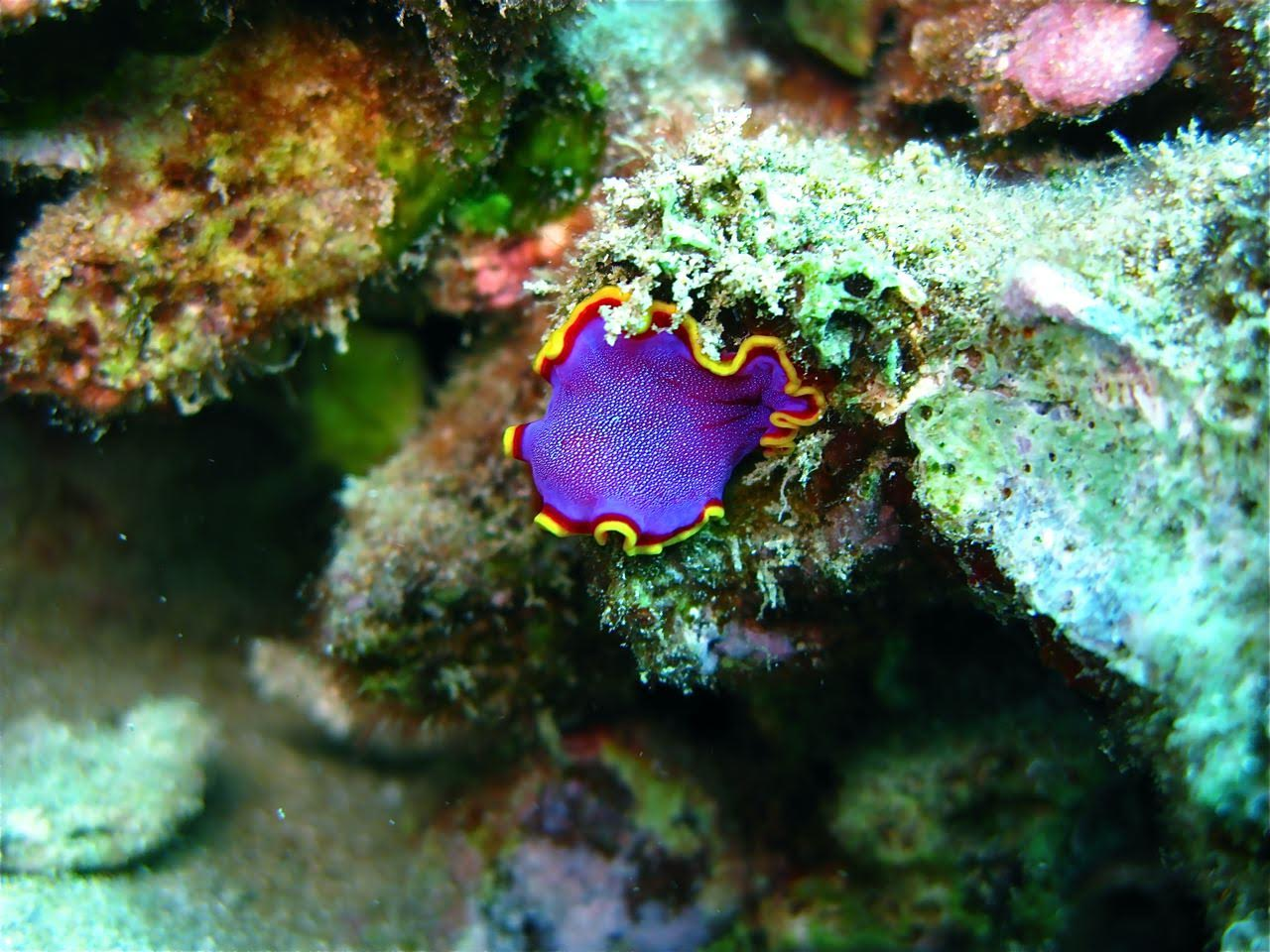 Center Reef – Nudibranch