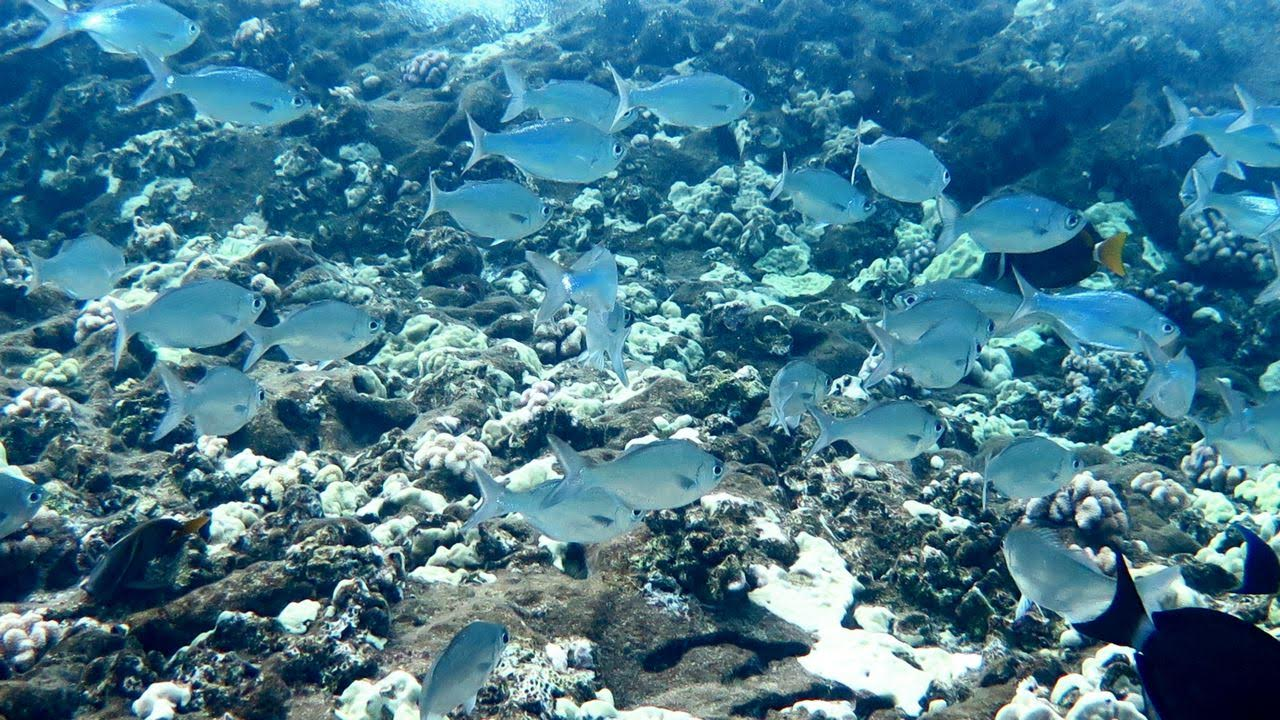 Molokini Crater Enenue – School of Fish