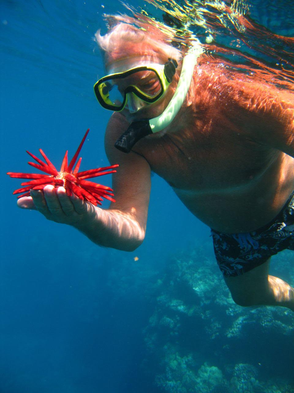 Snorkel Maui – Red Pencil Urchin
